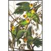 Caroline parrot