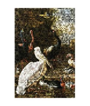 Pelican pixels