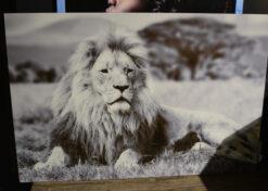 Alu art leeuw 2