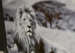 Alu art leeuw