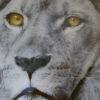 alu art lion vierkant
