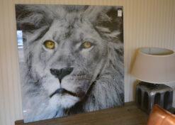 alu art lion vierkant 2