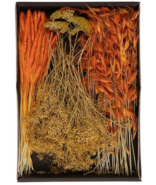 Dried Flowers Mix Tray Oranje