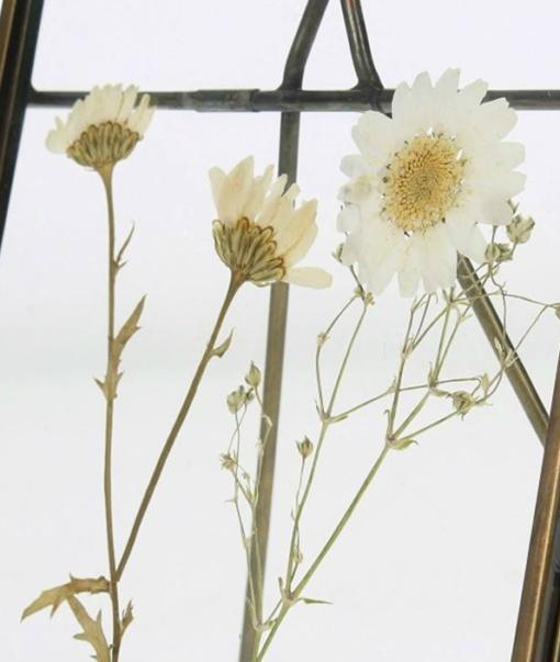 Frame Dried Flower Klein 2