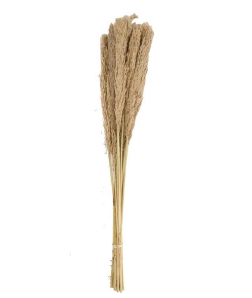Grass Plume Lenn Naturel