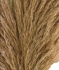 Pluim Vinz Detail