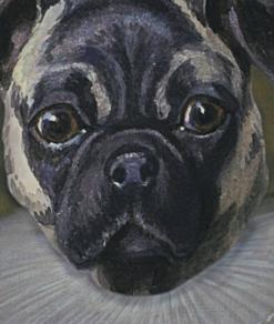 Royal Pug 1